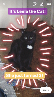 "Instagram Story of Leela the cat with purple and yellow captions and design"" srcset=""https://blog.hubspot.com/hs-fs/hubfs/gradual3.png?t=1543306004115&width=96&name=gradual3.png 96w, https://blog.hubspot.com/hs-fs/hubfs/gradual3.png?t=1543306004115&width=191&name=gradual3.png 191w, https://blog.hubspot.com/hs-fs/hubfs/gradual3.png?t=1543306004115&width=287&name=gradual3.png 287w, https://blog.hubspot.com/hs-fs/hubfs/gradual3.png?t=1543306004115&width=382&name=gradual3.png 382w, https://blog.hubspot.com/hs-fs/hubfs/gradual3.png?t=1543306004115&width=478&name=gradual3.png 478w, https://blog.hubspot.com/hs-fs/hubfs/gradual3.png?t=1543306004115&width=573&name=gradual3.png 573w"" sizes=""(max-width: 191px) 100vw, 191px"