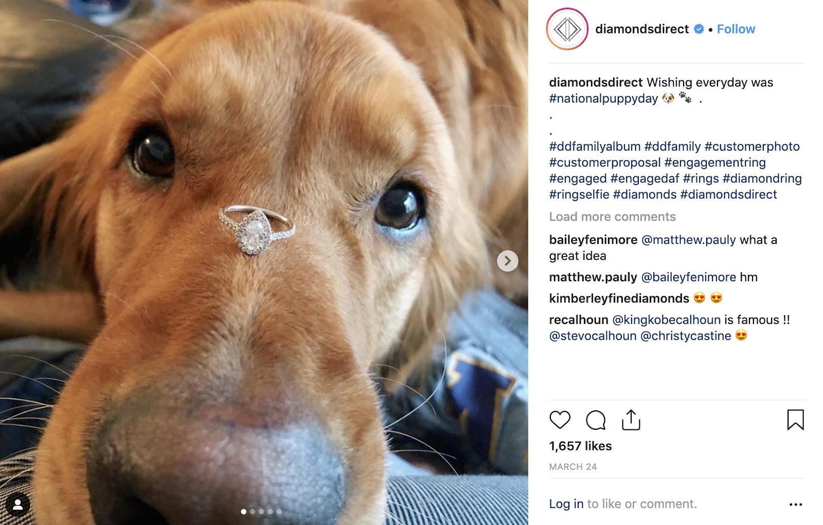 gioielli online diamanti cane sociale diretto