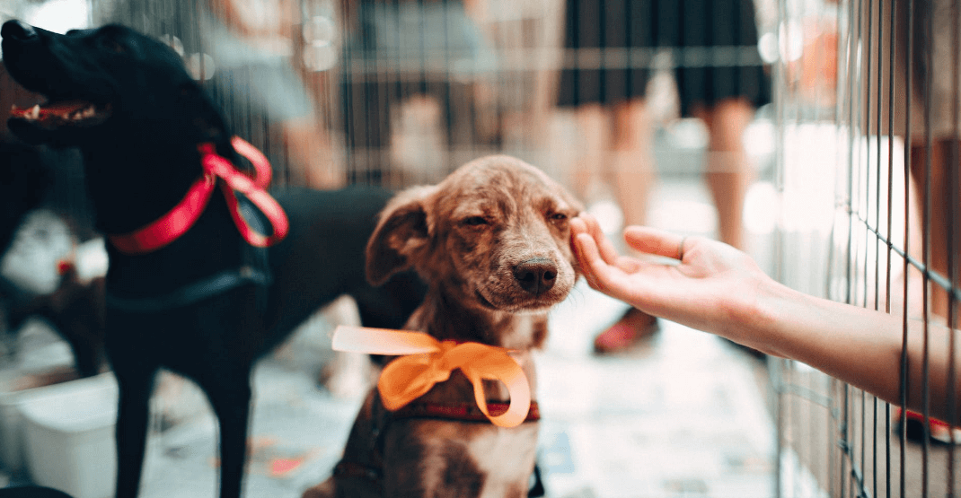 cane al rifugio per animali.