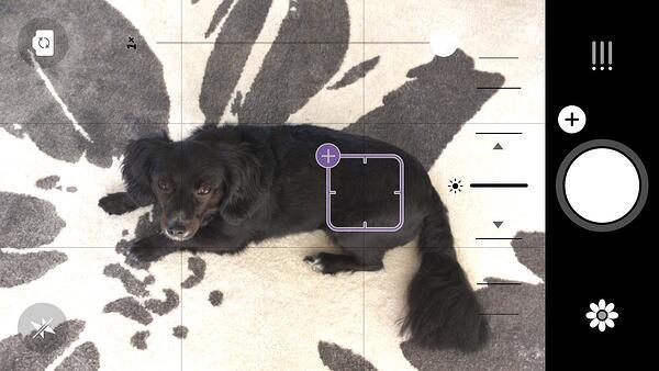 """Prima della foto di un cane nero su Camera + 1 app di fotoritocco """"title ="""" Camera + 1.jpg """"caption ="""" false """"data-limits ="""" true """"style ="""" larghezza: 600px; margine: 0px auto; """"srcset ="""" https://blog.hubspot.com/hs-fs/hubfs/Camera%2B1.jpg?width=300&name=Camera%2B1.jpg 300w, https: //blog.hubspot. com / hs-fs / hubfs / Camera% 2B1.jpg? larghezza = 600 e nome = Camera% 2B1.jpg 600w, https://blog.hubspot.com/hs-fs/hubfs/Camera%2B1.jpg?width=900&name = Camera% 2B1.jpg 900w, https://blog.hubspot.com/hs-fs/hubfs/Camera%2B1.jpg?width=1200&name=Camera%2B1.jpg 1200w, https://blog.hubspot.com /hs-fs/hubfs/Camera%2B1.jpg?width=1500&name=Camera%2B1.jpg 1500w, https://blog.hubspot.com/hs-fs/hubfs/Camera%2B1.jpg?width=1800&name= Fotocamera% 2B1.jpg 1800w """"dimensioni ="""" (larghezza massima: 600px) 100vw, 600px"""