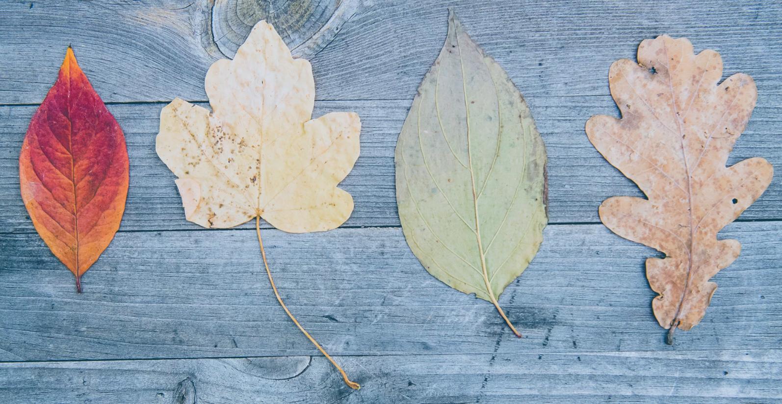 I 4 tipi di proposte di valore che ogni azienda ha bisogno