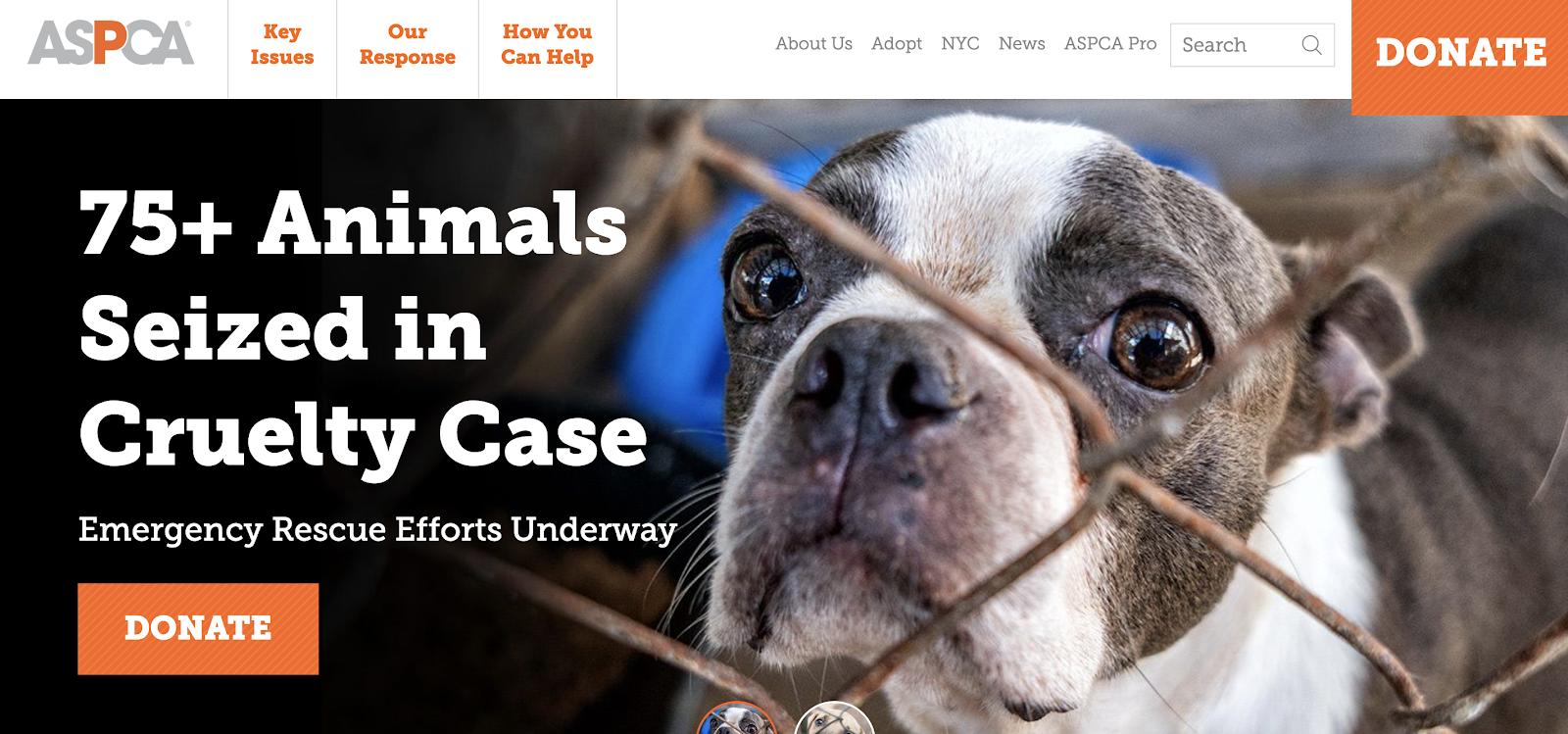 esempio di segmentazione psicografica sulla homepage di ASPCA.