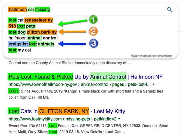Risultati del riempimento automatico di Google per la mancanza del gatto a mezzaluna