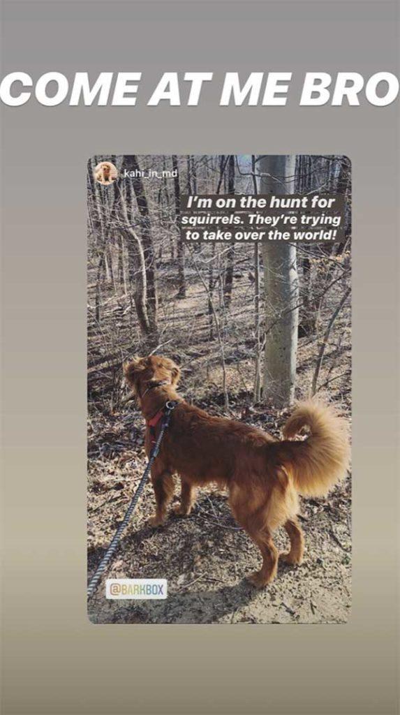 Una storia di Instagram da un seguace di BarkBox di un golden retriever in una passeggiata con il testo